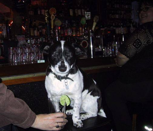 RCA dog at bar.jpg