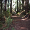 trail-through-redwoods.jpg