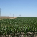 Corn field in Nebraska